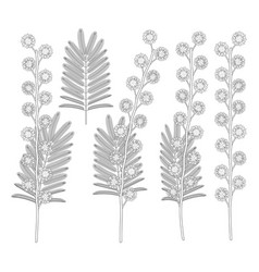 set black and white with mimosa vector image