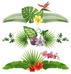 tropical borders vector image vector image