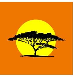 Acacia sun1 vector