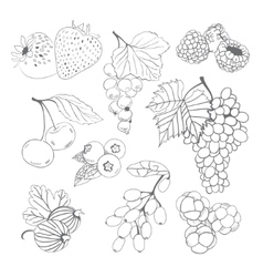 Berries collection for coloring book vector