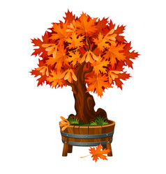 Bonsai maple tree in a wooden tub or flowerpot vector
