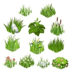 Collection of different grass and flowers vector