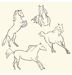horses vector image