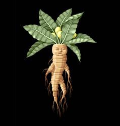Mandrake with human face vector