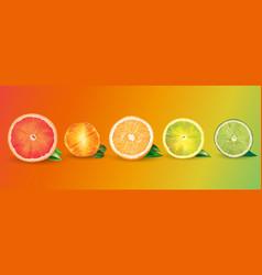 Orange lemon citrus mandarin grapefruit and vector