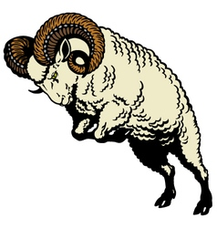 Ram sheep vector