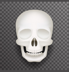 Realistic human skull isolated 3d realistic vector