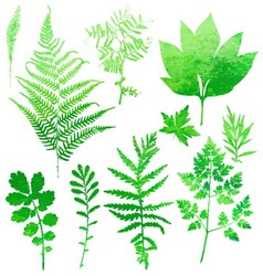 Set garden watercolor leaves vector