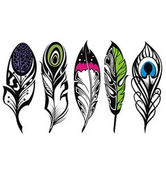 Set of ethnic feathers vector image