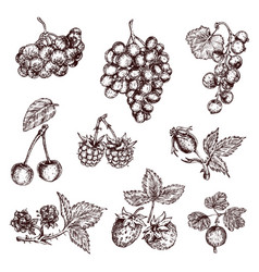 Berries hand drawn monochrome set vector