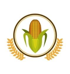Fresh corn vegetable vector