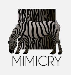 mimicry hand drawn zebra vector image