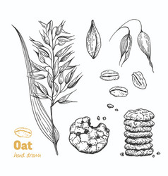 oats hand drawn vector image