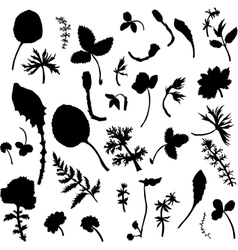 Set of herbs and leaves silhouette s vector image