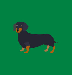 cartoon funny dachshund breed of dog vector image