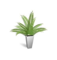 Ornamental plant Fern in a pot vector