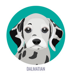dalmatian puppy in green circle vector image