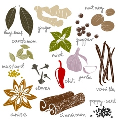 stylized spices vector image