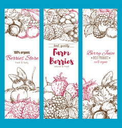 Banners of fresh garden berries sketch vector