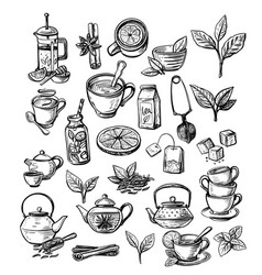 collection hand drawn tea vector image