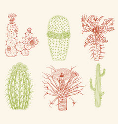 home cactus plants and flowers set cozy cute vector image