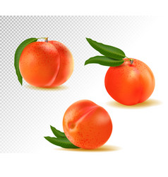 peach sweet fruit 3d icons set realistic vector image