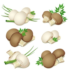 set of champignon vector image