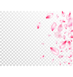 spring tree flowers parts airy flying petals vector image