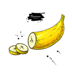 banana sliced piece drawing isolated hand vector image vector image