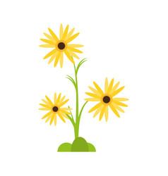 marigold flower decorative plant vector image vector image