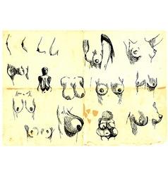 Diversity women-s breasts vector