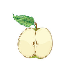 Half apple fruit hand drawn vector