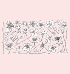 sakura flowers leaves branches vector image