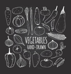 set of vegetables in doodle style vector image