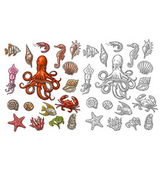 set sea animals shell coral crab shrimp star vector image