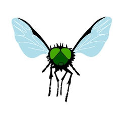 Green-eyed Fly vector image vector image