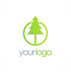 pine green tree logo vector image