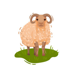 Cute sheep stands on a green meadow vector