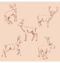 Deer sketch Pencil drawing by hand Vintage vector image