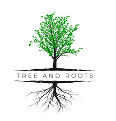 tree silhouette with green leaves and root vector image