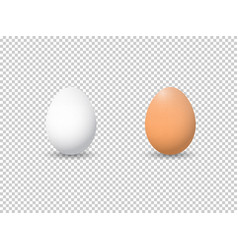 Two realistic white eggs isolated eggs on white vector