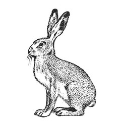 Wild gray hare forest animal vintage monochrome vector