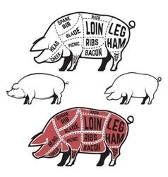 Butcher diagram scheme and guide - Pork cuts vector image