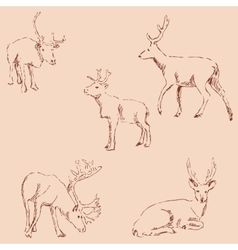 Deer sketch Pencil drawing by hand Vintage vector