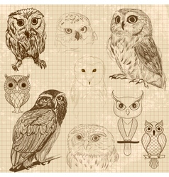 Set of retro owl sketches vector image