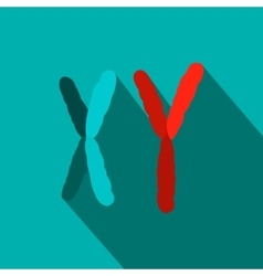X and Y chromosome flat icon vector