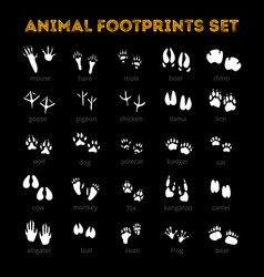 animal track black background vector image