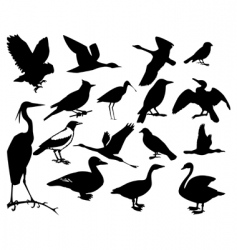 collection of silhouettes of birds vector image