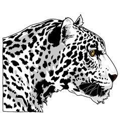 White Cougar Head Art vector image