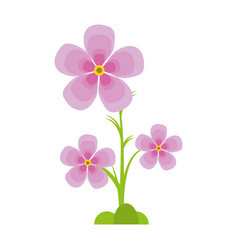 Magnolia flower flora ornament vector